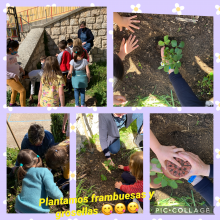 Plantamos frambuesas y grosellas